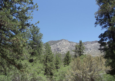 Mt-Charleston-Tour-2