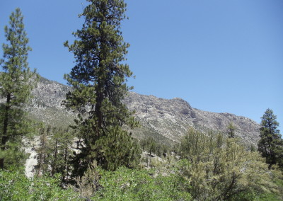 9 Mt Charleston Tour