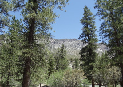 9a Mt Charleston Tour